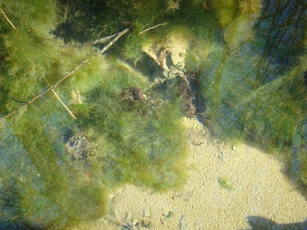 Сноп лъчи оглеждащи се във водата